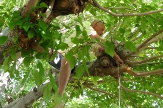 Hanging the Pinata